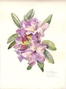 Rhododendron - Watercolour